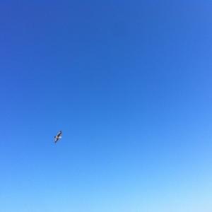 the open sky